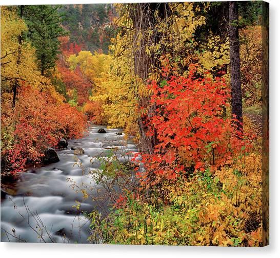 Autumn Rapids Canvas Print by Leland D Howard