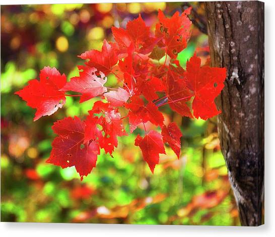 Canvas Print featuring the photograph Autumn Red Leaves by Tatiana Travelways