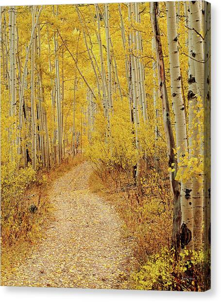 Autumn Road Canvas Print by Leland D Howard