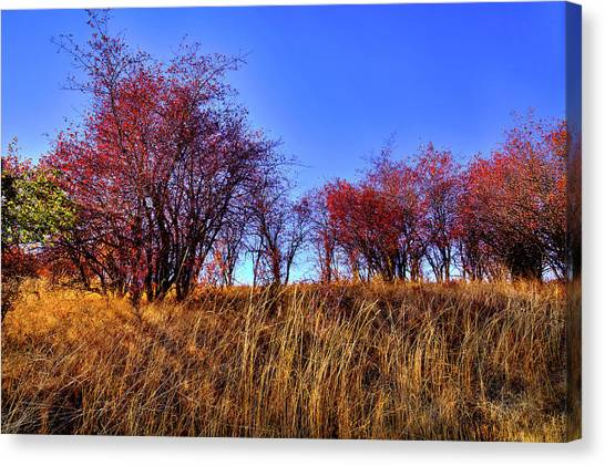 Canvas Print featuring the photograph Autumn Sun by David Patterson