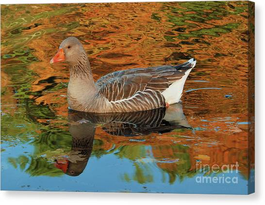 Autumn Swim Canvas Print