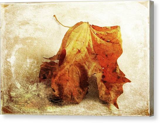 Canvas Print featuring the photograph Autumn Texture by Randi Grace Nilsberg