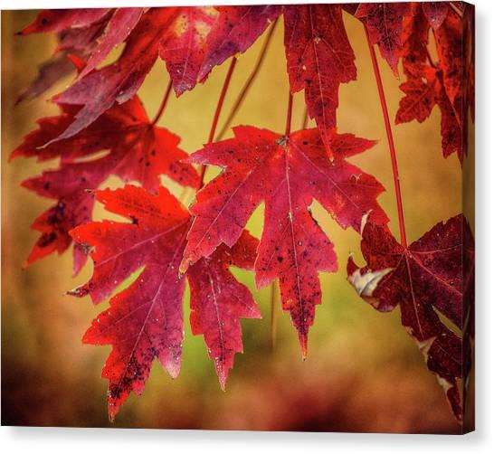 Autumn Watch Canvas Print