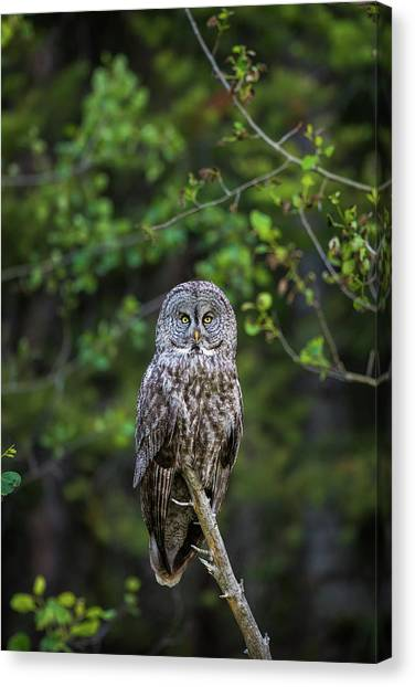 Canvas Print featuring the photograph B16 by Joshua Able's Wildlife