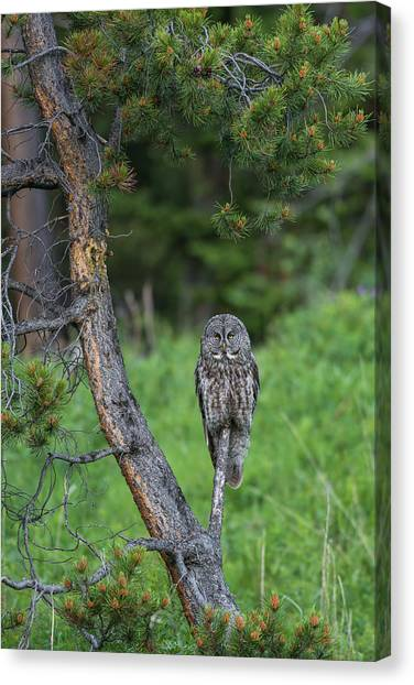 Canvas Print featuring the photograph B20 by Joshua Able's Wildlife