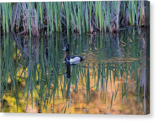 Canvas Print featuring the photograph B32 by Joshua Able's Wildlife