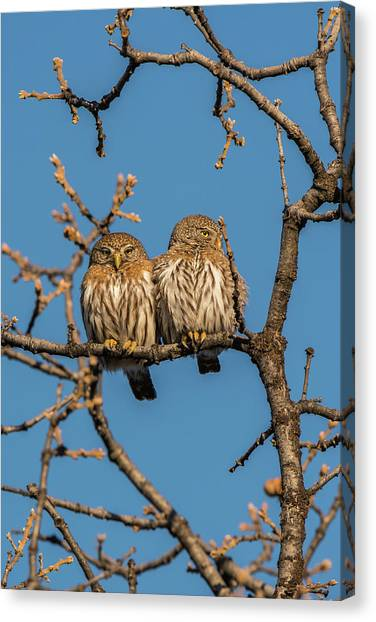 Canvas Print featuring the photograph B36 by Joshua Able's Wildlife