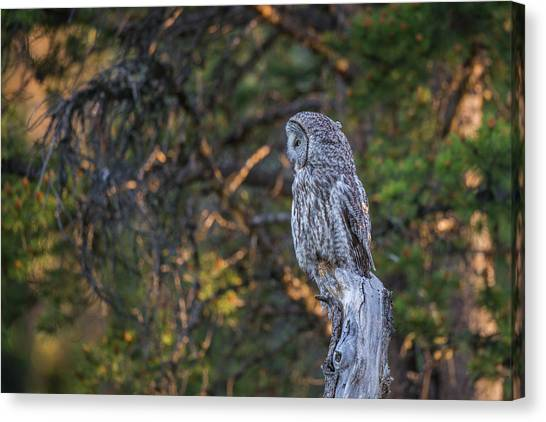 Canvas Print featuring the photograph B46 by Joshua Able's Wildlife