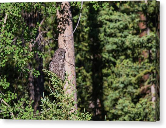 Canvas Print featuring the photograph B50 by Joshua Able's Wildlife