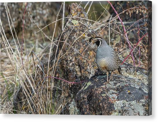 Canvas Print featuring the photograph B53 by Joshua Able's Wildlife