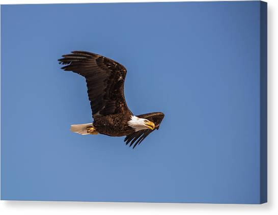 Canvas Print featuring the photograph B8 by Joshua Able's Wildlife