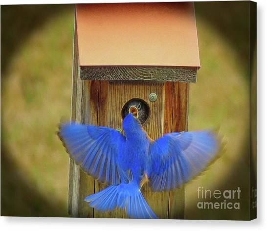 Baby Bluebird Feeding Time Canvas Print