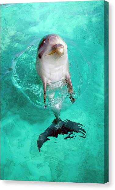 Baby Dolphin Canvas Print