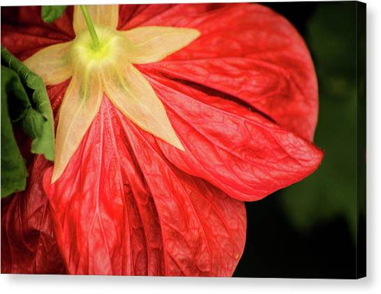 Back Of Red Flower Canvas Print