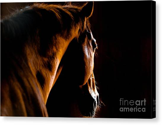 Livestock Canvas Print - Back Shot Of A Horse by Makieni