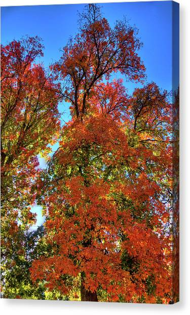 Canvas Print featuring the photograph Backlit Autumn by David Patterson