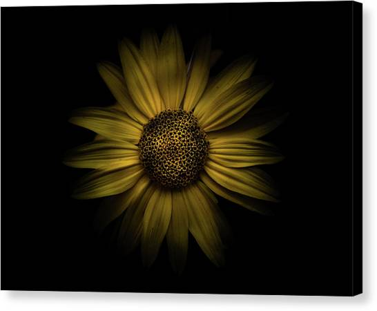Canvas Print featuring the photograph Backyard Flowers 18 Color Version by Brian Carson