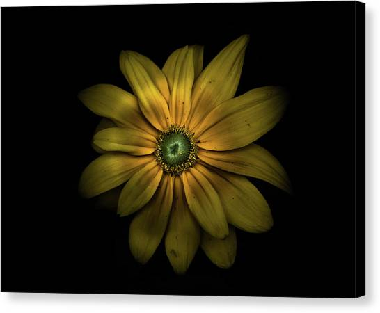 Canvas Print featuring the photograph Backyard Flowers 34 Color Version by Brian Carson