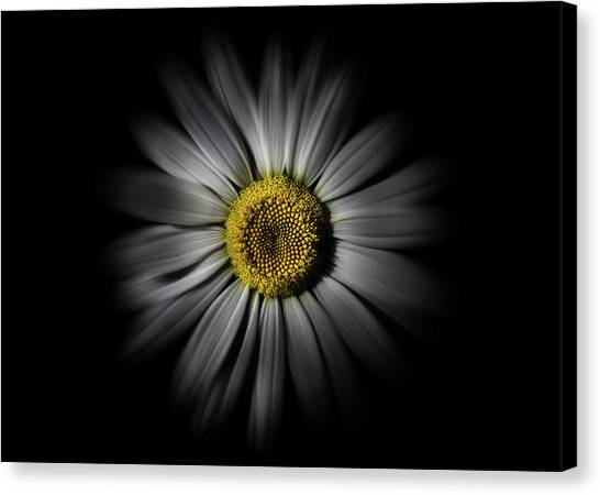 Canvas Print featuring the photograph Backyard Flowers 52 Color Flow Version by Brian Carson