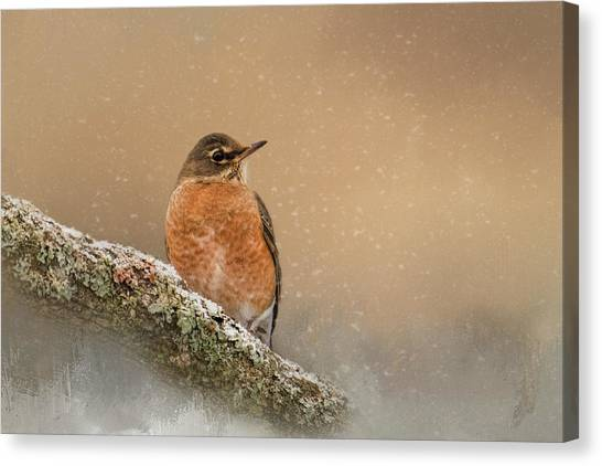 Backyard Visitor Canvas Print