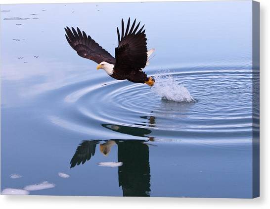 Bald Eagle Splashing In Dive Canvas Print