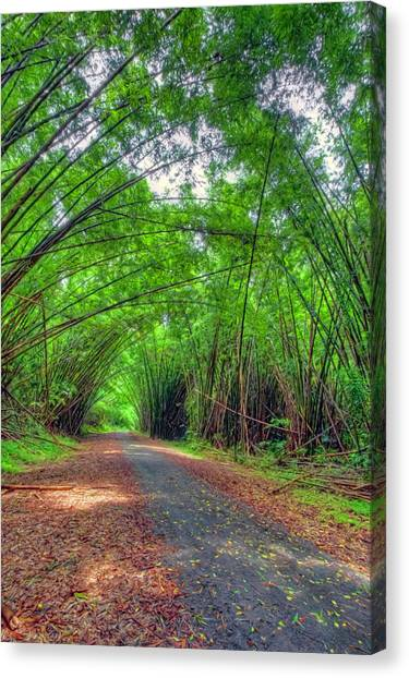 Bamboo Cathedral 2 Canvas Print