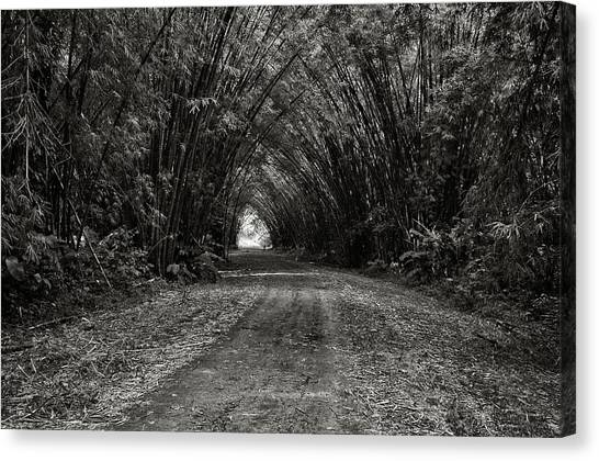 Bamboo Cathedral I Canvas Print