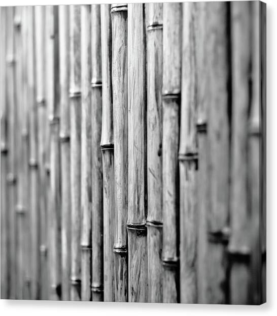 Bamboo Fence Canvas Print