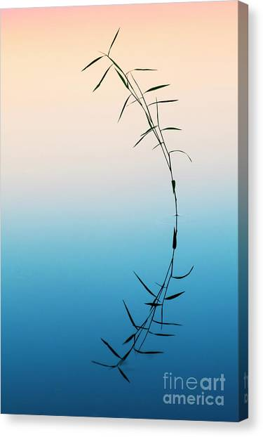 Bamboo Grass Reflection Canvas Print by Tim Gainey