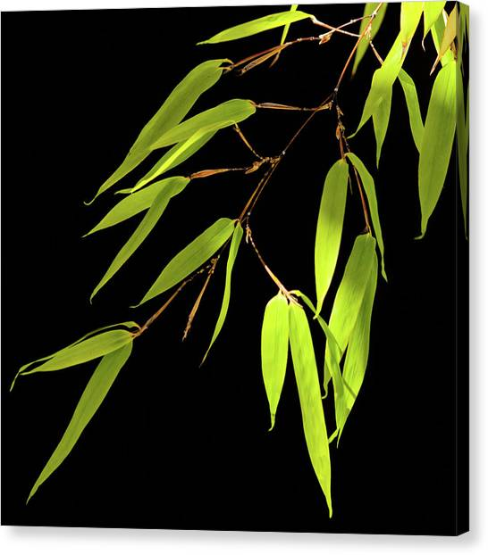Bamboo Leaves 0580a Canvas Print