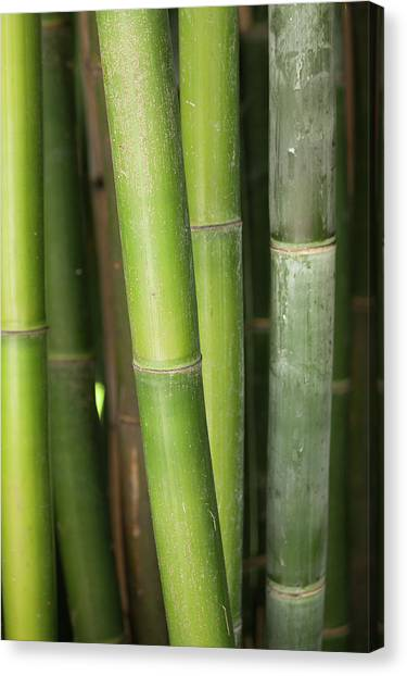 Bamboo Stalk 4057 Canvas Print