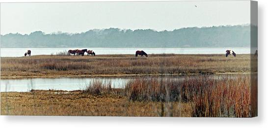 Canvas Print featuring the photograph Band Of Wild Horses At Sinepuxent Bay by Bill Swartwout Fine Art Photography