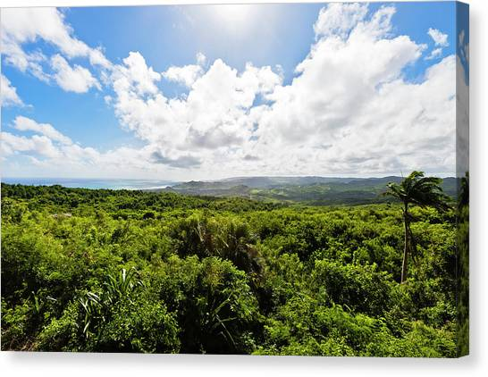 Barbados Hinterland Canvas Print by Flavio Vallenari