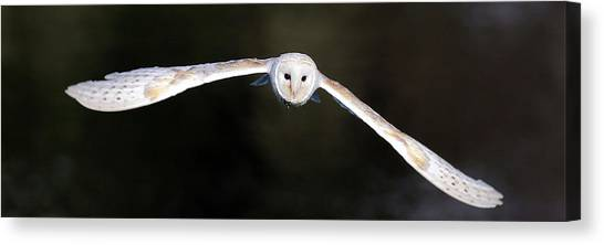 Canvas Print featuring the photograph Barn Owl In Flight by Grant Glendinning