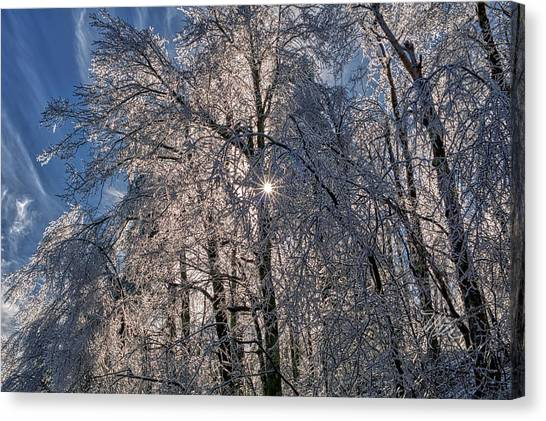 Bass Lake Trees Frozen Canvas Print