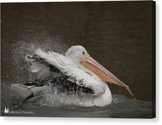 Bathing Pelican Canvas Print