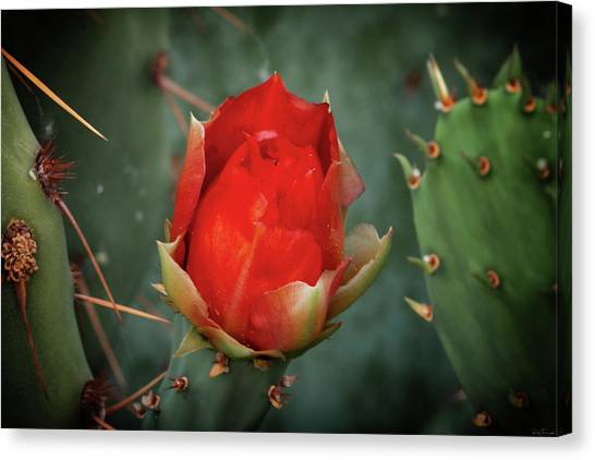 Canvas Print featuring the photograph Be My Valentine by Rick Furmanek