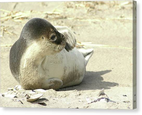 Beach Seal Canvas Print