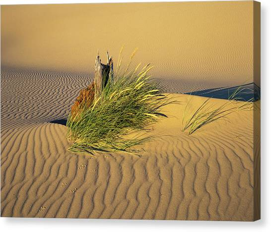 Beachgrass And Ripples Canvas Print