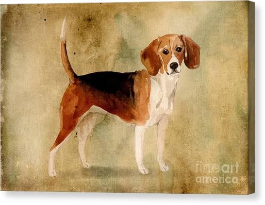 Purebred Canvas Print - Beagle by John Edwards