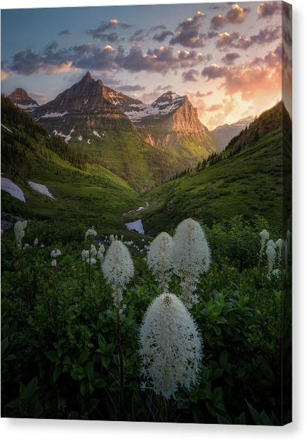 Bear Grass Bloom / Highline Trail, Glacier National Park  Canvas Print