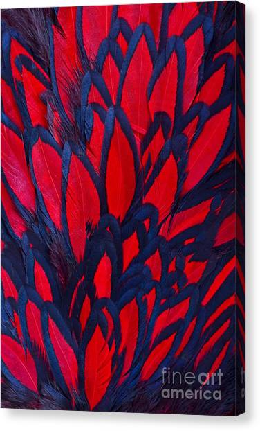 Zoology Canvas Print - Beautiful Abstract Background by Keith Publicover