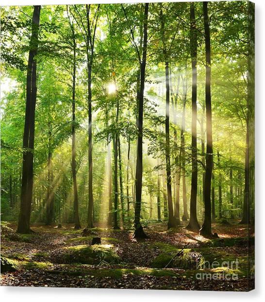 Woodland Canvas Print - Beautiful Autumn Forest In Poland by Piotr Krzeslak