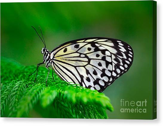 Yellow Butterfly Canvas Print - Beautiful Butterfly Paper Kite, Idea by Ondrej Prosicky