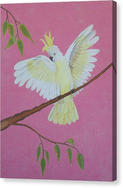 Fineart Canvas Print - Beautiful Cockatoo by Brian Leverton