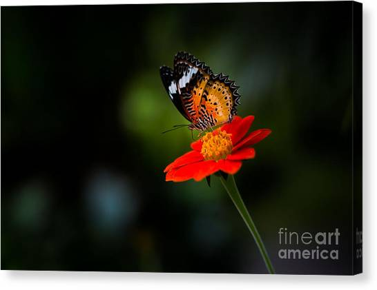 Yellow Butterfly Canvas Print - Beautiful Flower And Butterfly by Mr Burger Hut