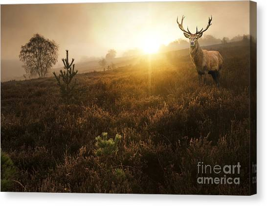 Atmosphere Canvas Print - Beautiful Forest Landscape Of Foggy by Matt Gibson