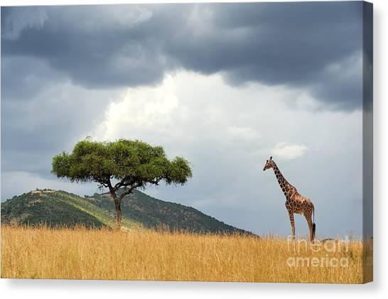 Bush Canvas Print - Beautiful Landscape With Nobody Tree by Volodymyr Burdiak