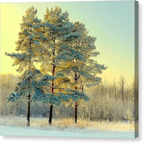 Beautiful Landscape With Winter Forest Canvas Print by Deserg