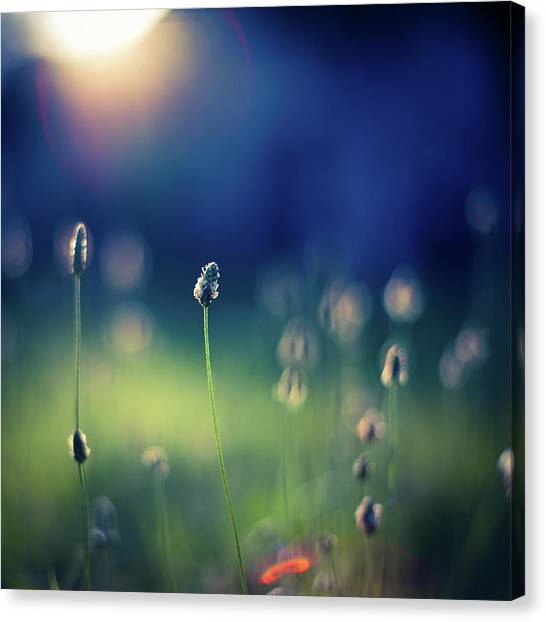 Blade Of Grass Canvas Print - Beautiful Meadow by Jeja